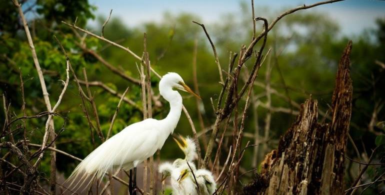 FWC reminds the public: Nesting waterbirds need room to breed